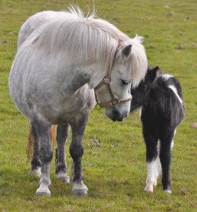 Blue Iris and foal