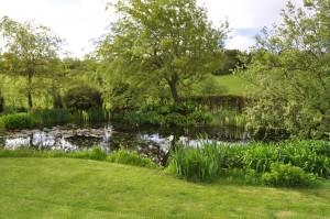 2014 fish pond wakens