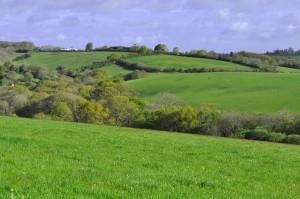 2014 hay fields