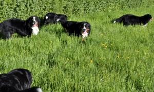 2014 kids in the hay field