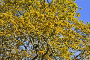 2014 the mighty oak